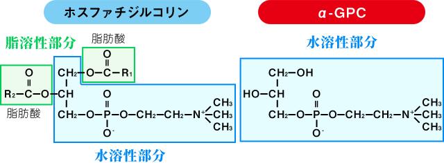 α-GPCとホスファチジルコリンの構造の違い(構造式)