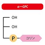 認知症回避で注目の栄養素α-GPCとは?アイキャッチ